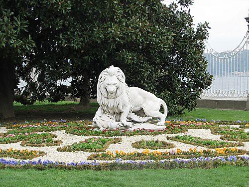 Lion for ben