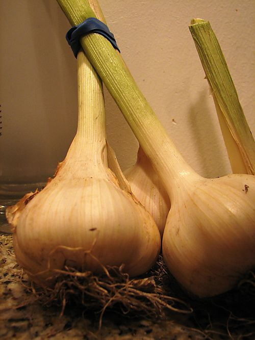 Ah garlic