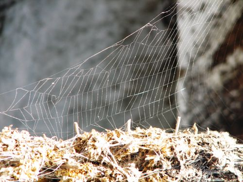 Web at the weavers house