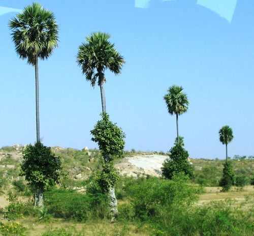 Palm line
