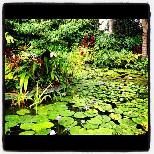 Jurrasic swamp