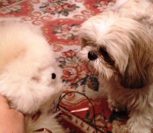 Meeting of the fuzzies