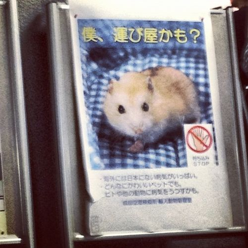 Dont pet the hamster