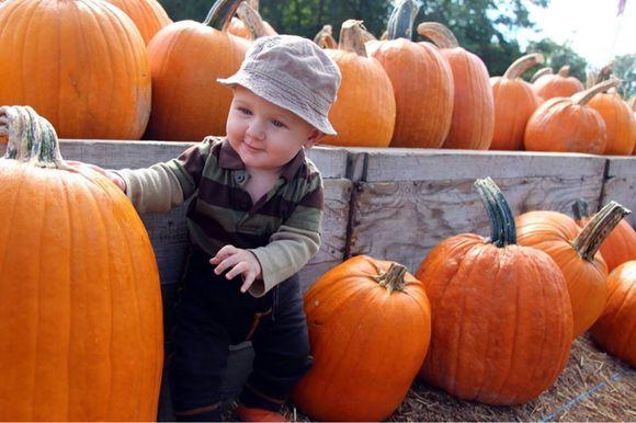 In the Pumpkin Patch
