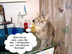 Never_trust_a_cat