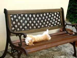 Kastro_cat