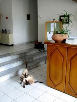 Dupiani_cats