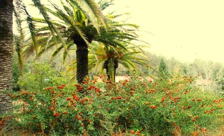 December_palms