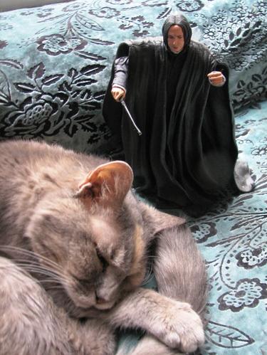 Catslayer