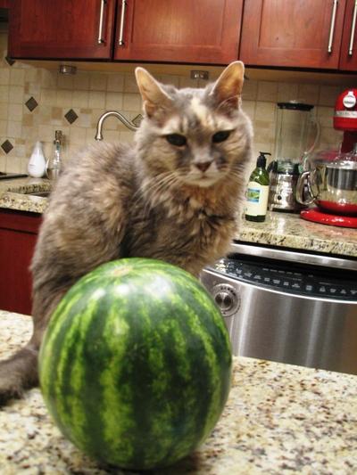Melon_days